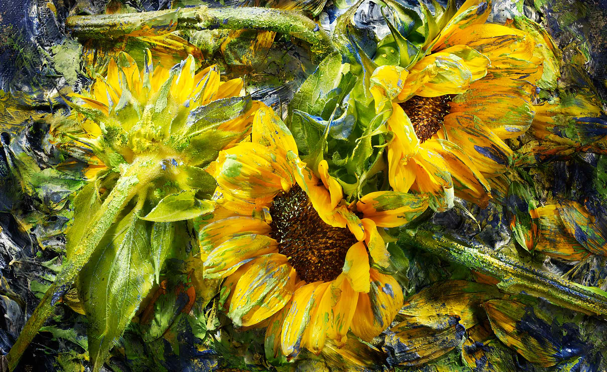 Edible  painterly sunflowers  shot on a painted background