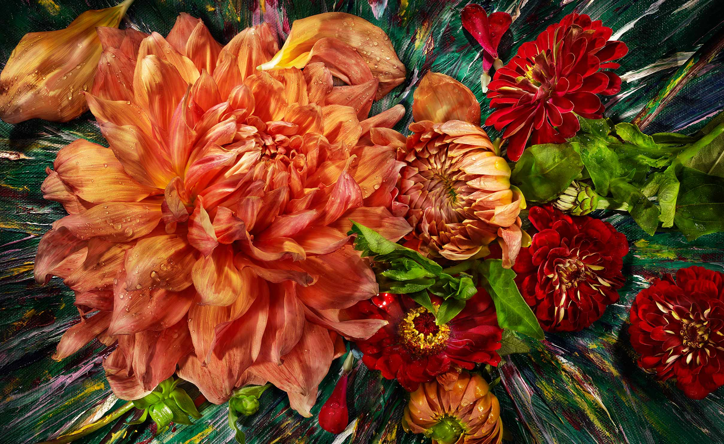 edible  painterly orange and red Dahlia and Zinnias  shot on a painted background