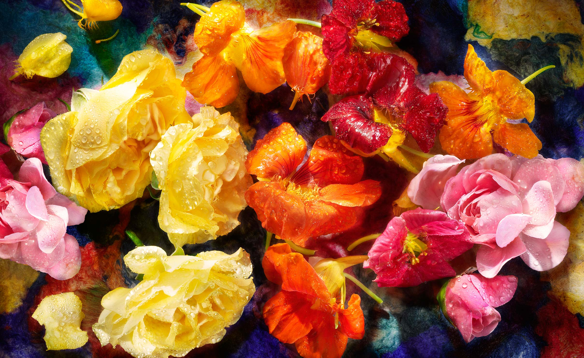 edible Roses and Nastursium flowers shot on a painted background