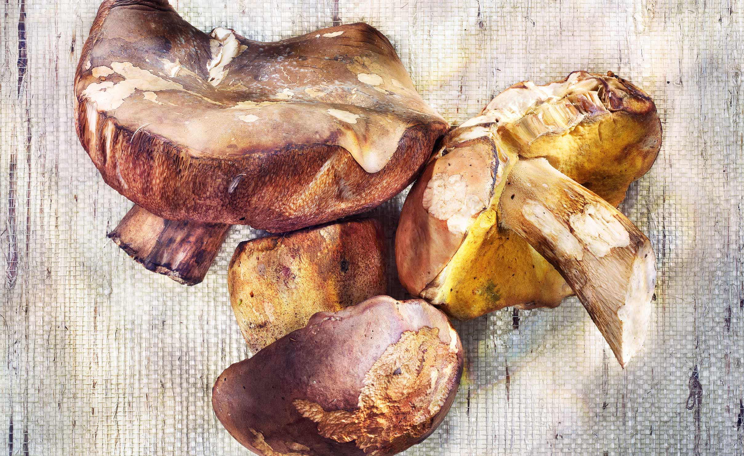Three Bolete mushrooms on paper background